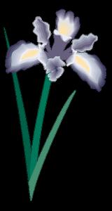 iris messina