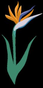 piante messina