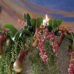 Addobbo-chiesa-sposi-piante-carnivore