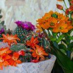 vasto assortimento di piante grasse ornamentali